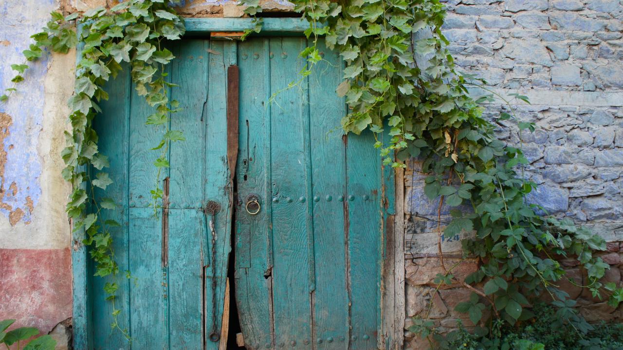Green doorway covered in ivy.