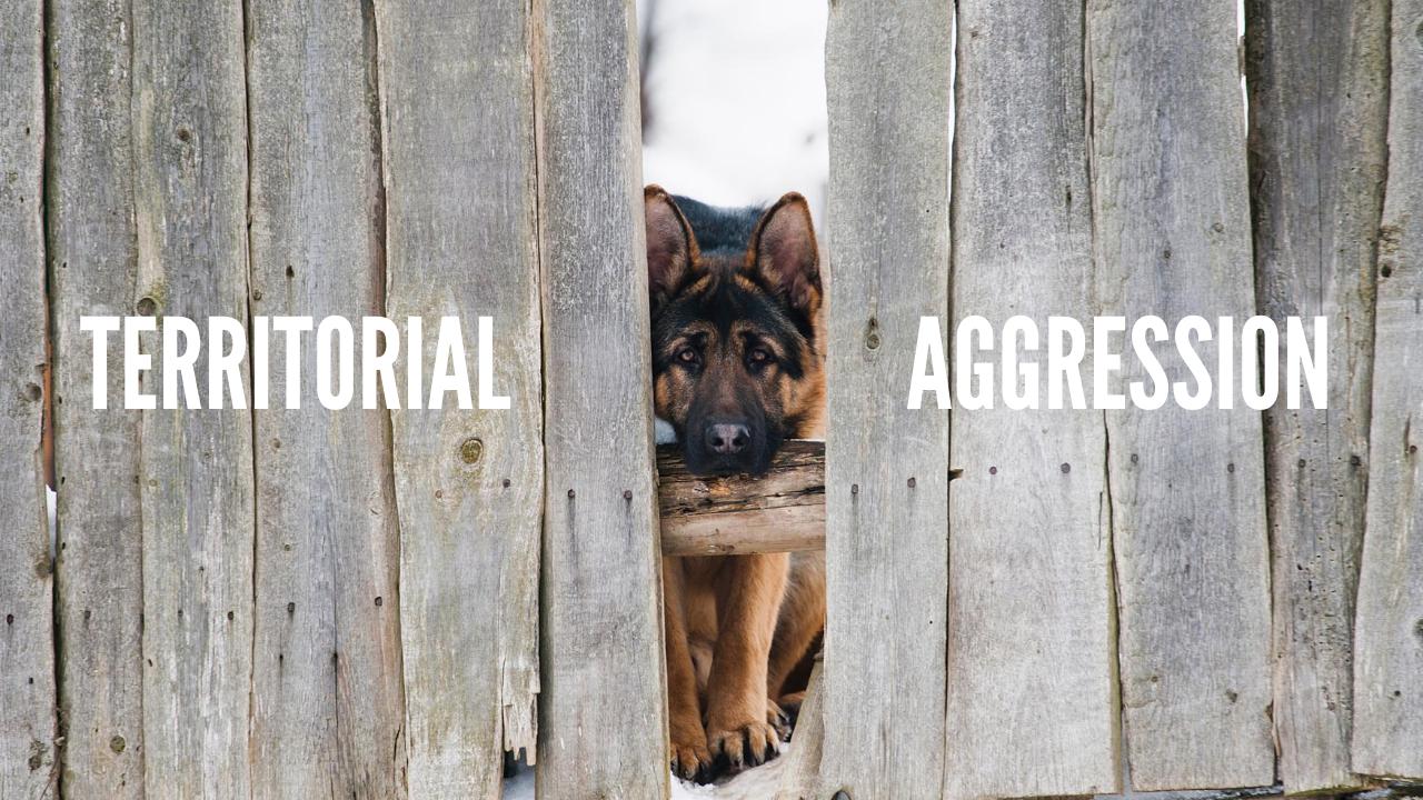 Metropawlitan Dog Training - Territorial Aggression