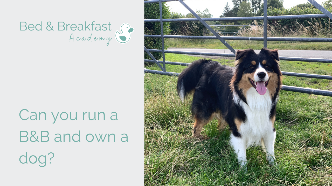 Can you run a B&B and own a dog? | tri colour Australian Shepherd by gate in field | Owning a B&B Dog