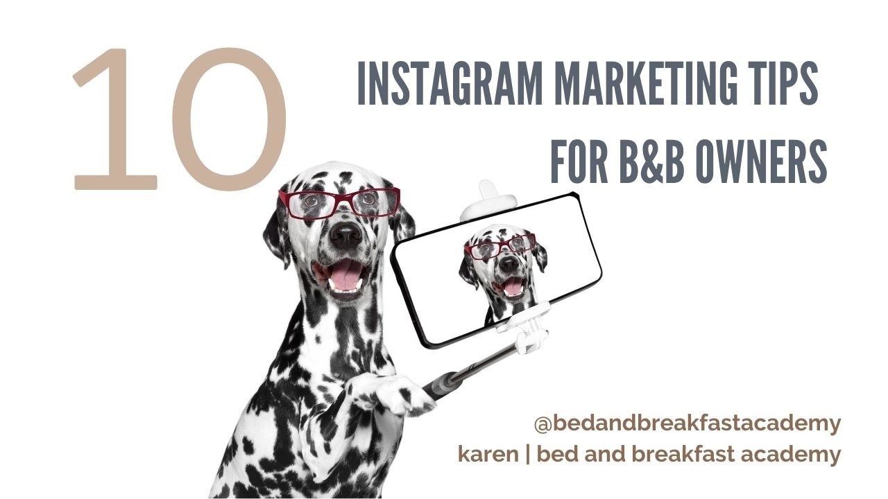 Dalmation dog holding a selfie stick and a phone 10 instagram tips for B&B Owners