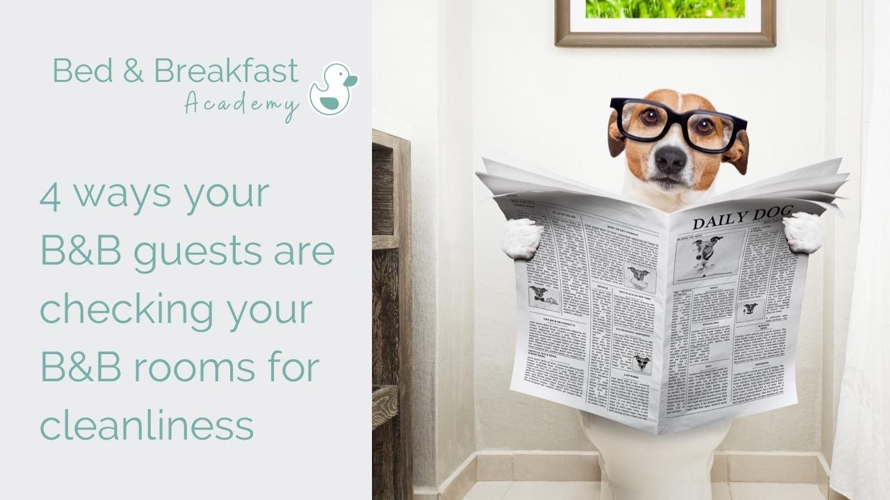 Cleaning a B&B | how clean is your B&B room | photo shows dog sitting on a toilet reading a newspaper