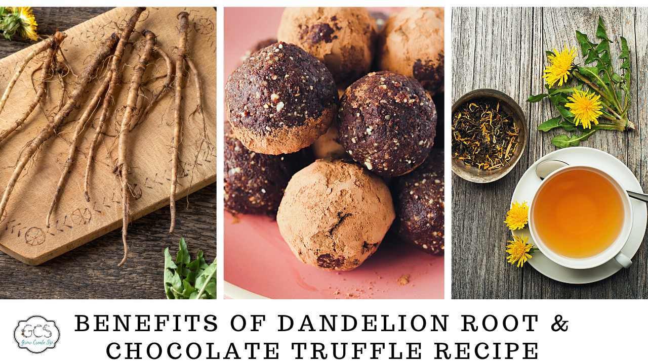 Benefits of dandelion root and chocolate truffle recipes