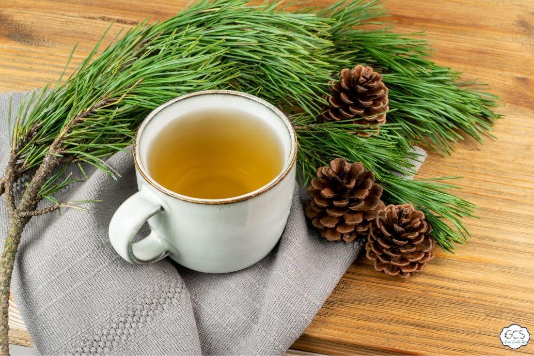 Pine Needle Tea Recipe