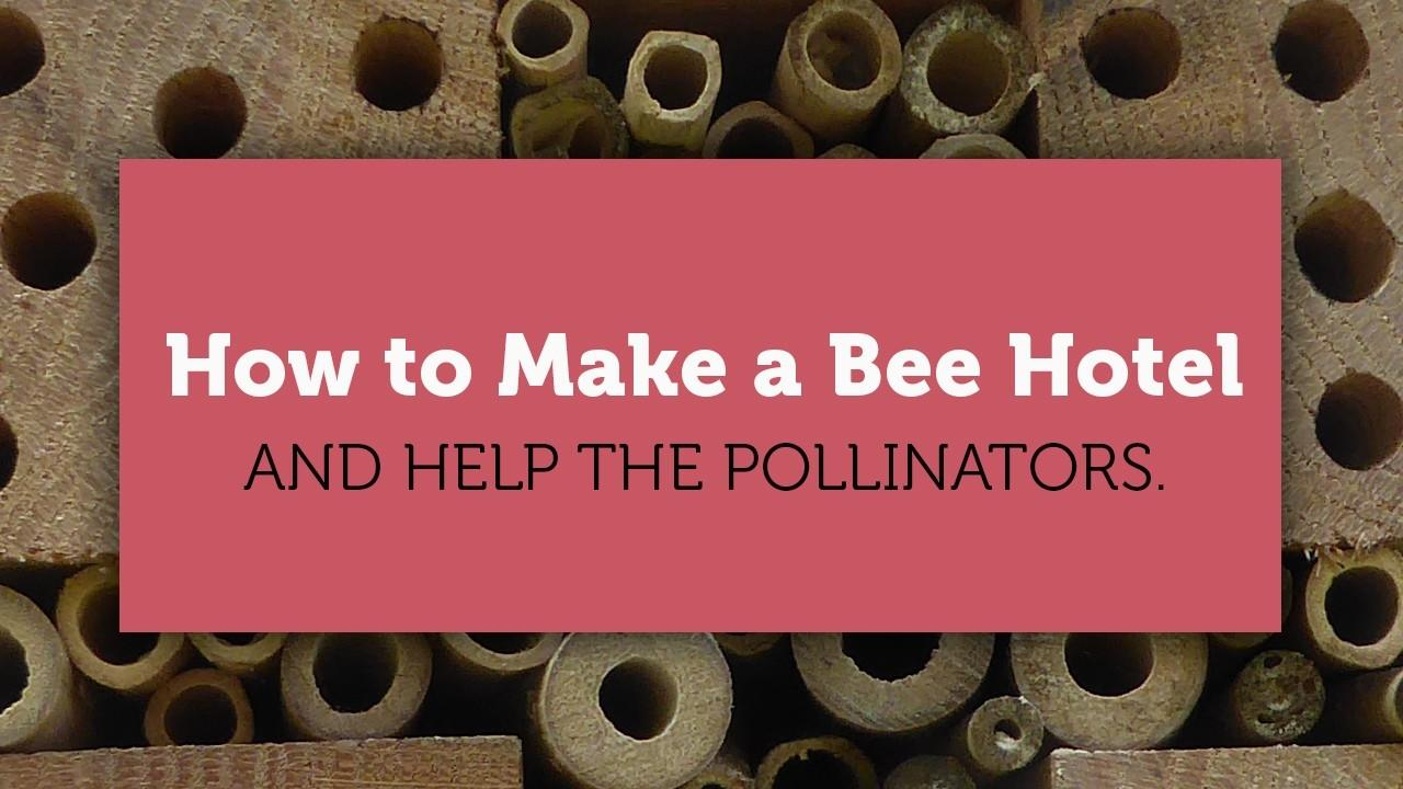 how to make a bee hotel blog cover image