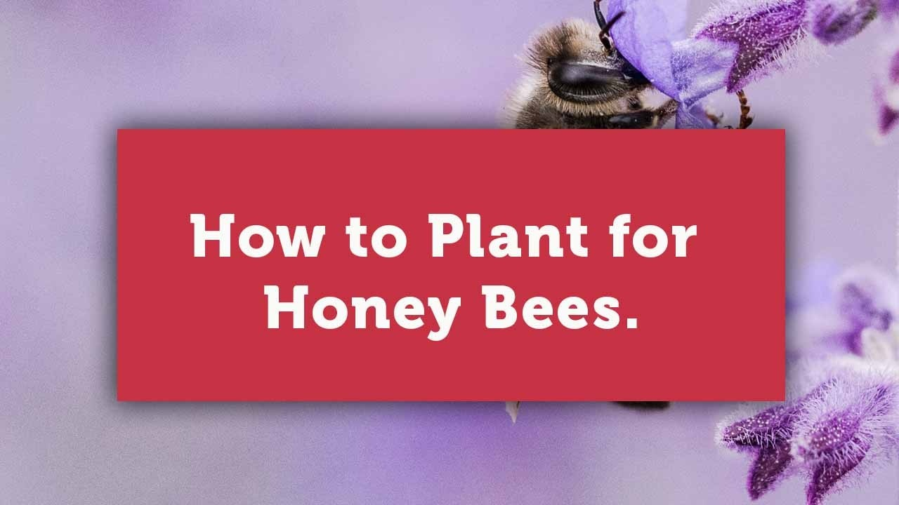 how to plant for bees blog cover