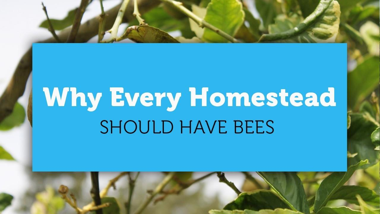 why every homestead should have bees blog cover image