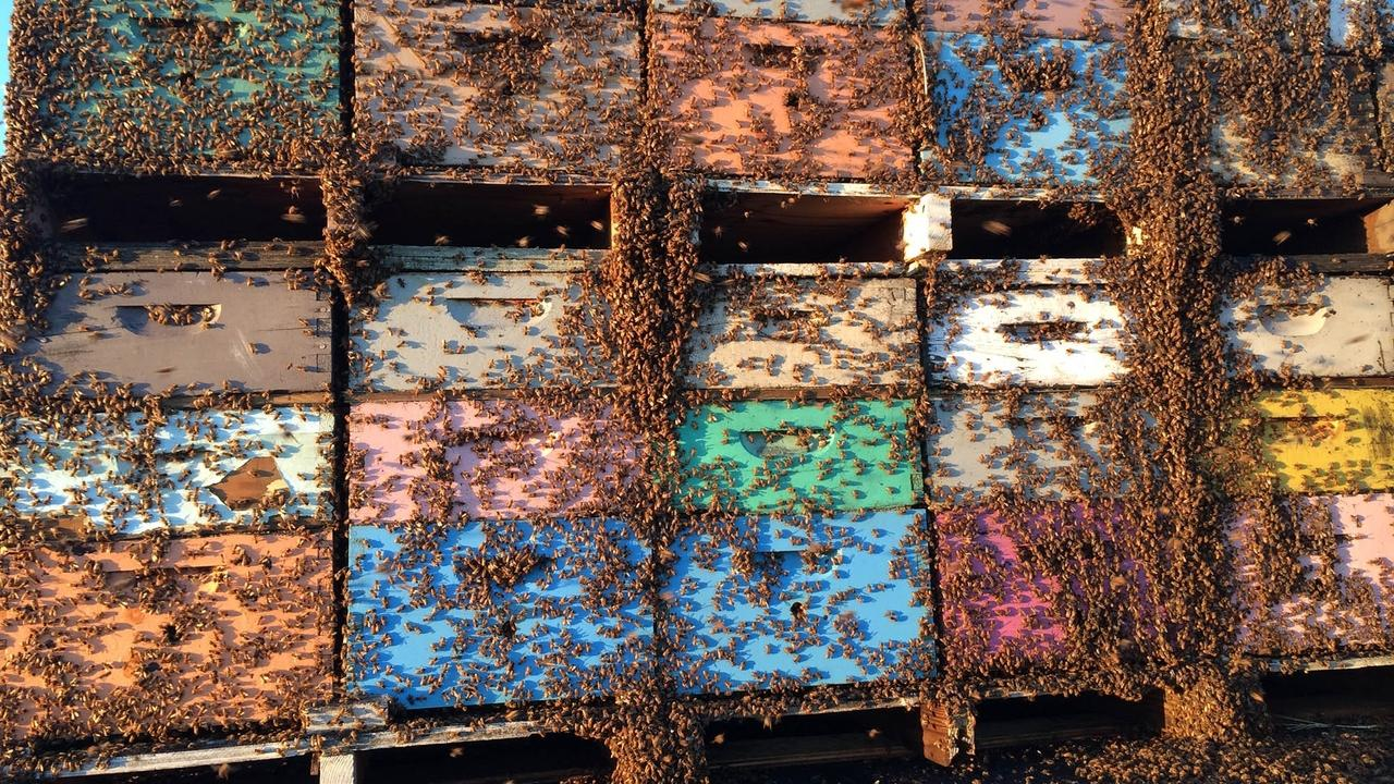 beehives on a truck covered in bees being moved