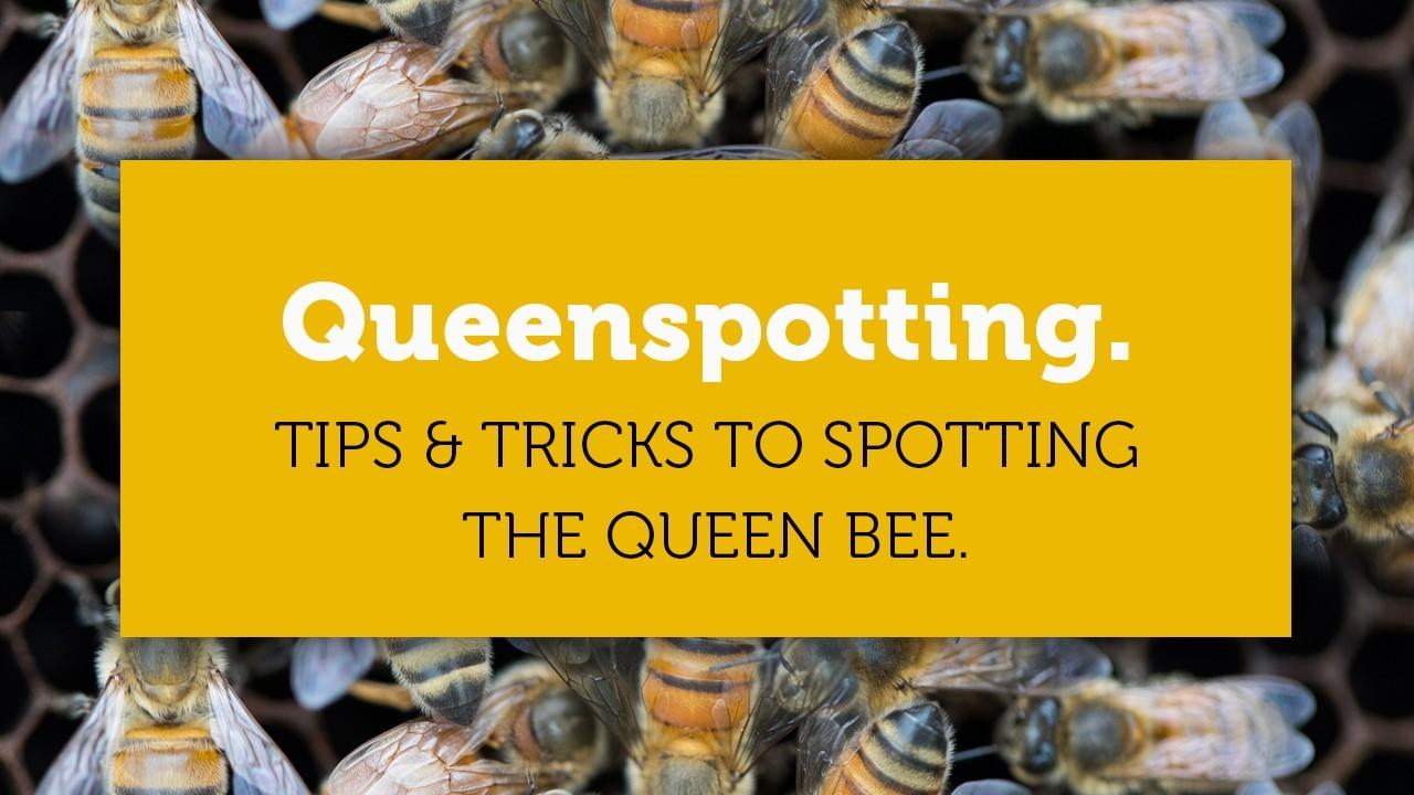 queenspotting tricks and tips blog title page