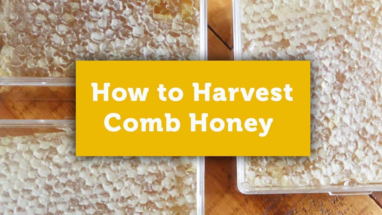 comb honey blog cover