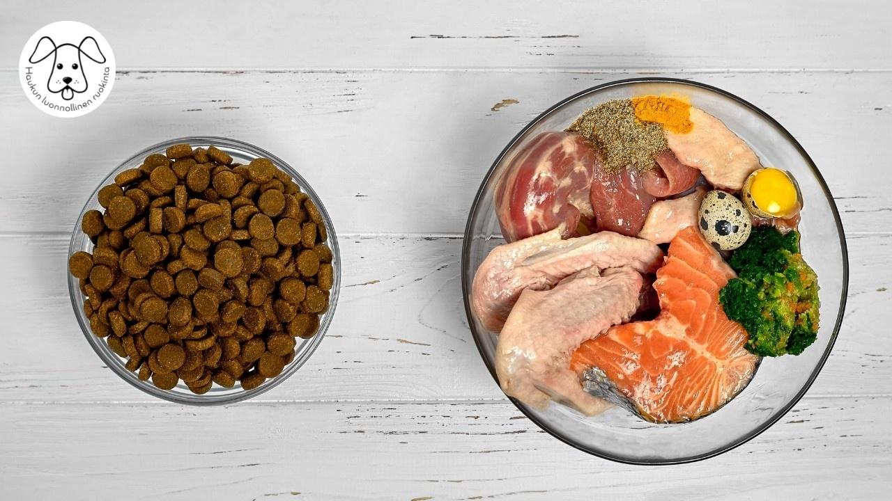 Kuvassa on vasemmassa kipossa koiran kuivamuonaa ja oikealla olevassa kipossa koiran raakaruokaa.