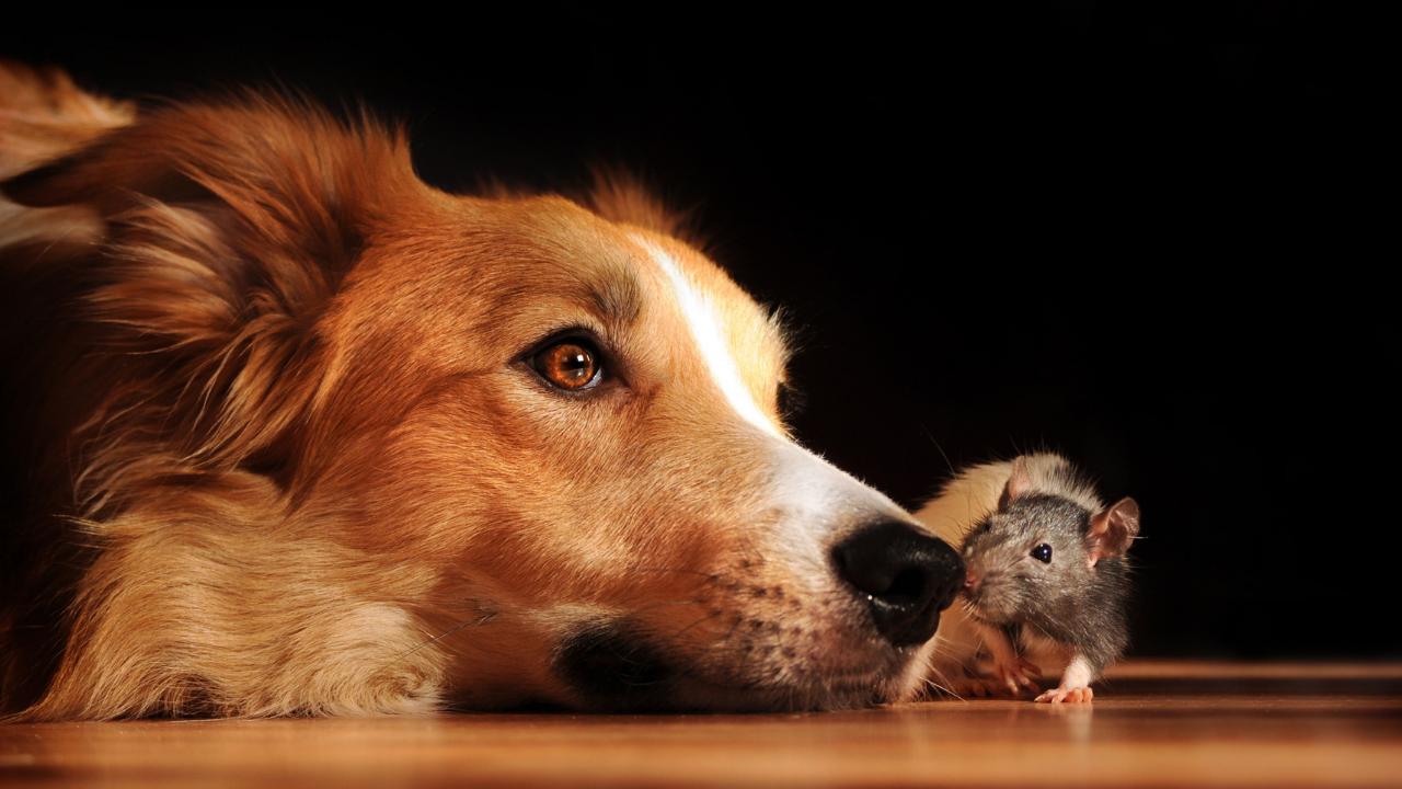 koira on lihansyoja eika sekasyoja