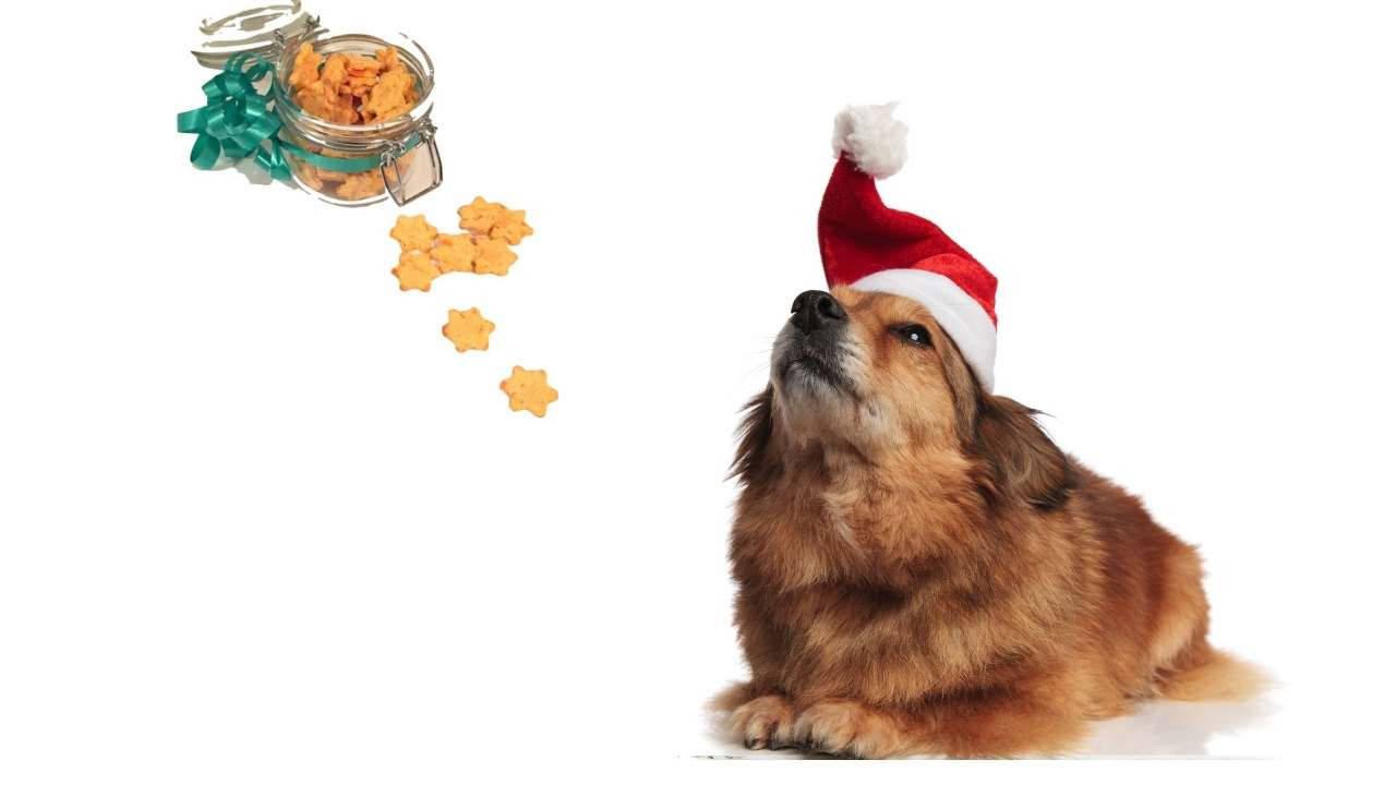 piparit koiralle resepti