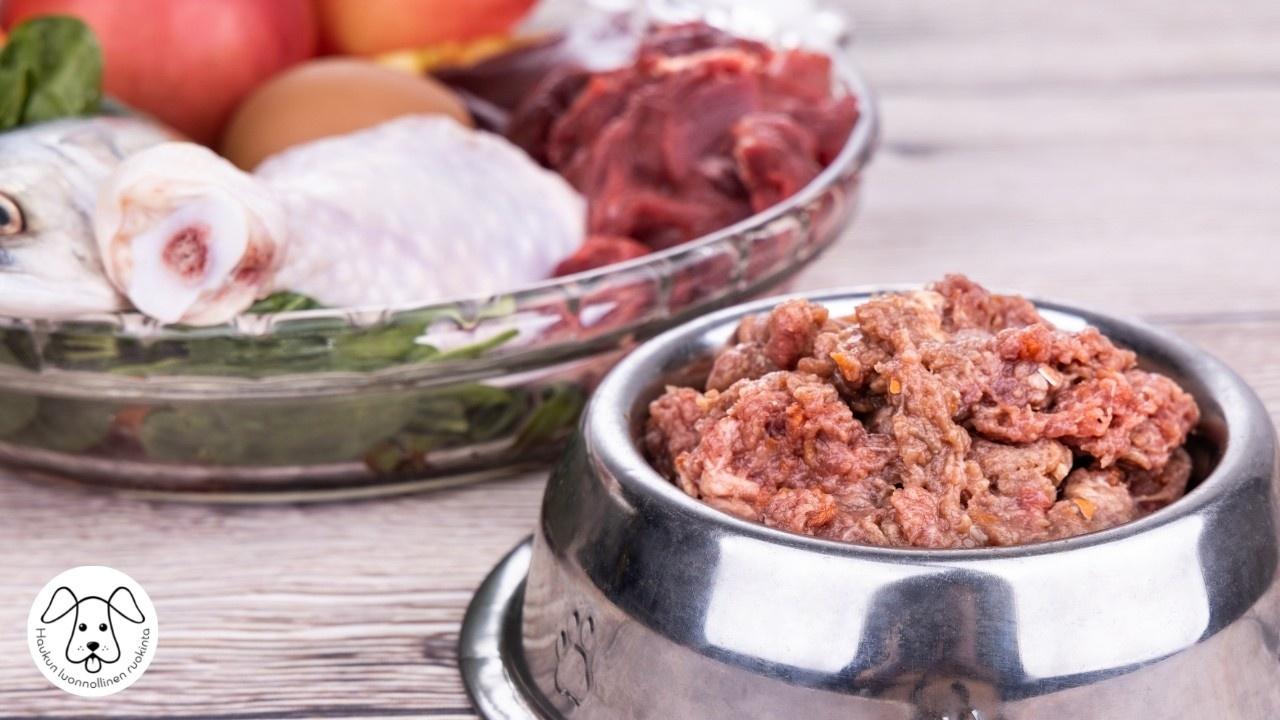 Koiran ruokakupissa raakaa jauhelihaa ja taustalla toisessa kulhossa raakaa lihaa ja kananmuna.