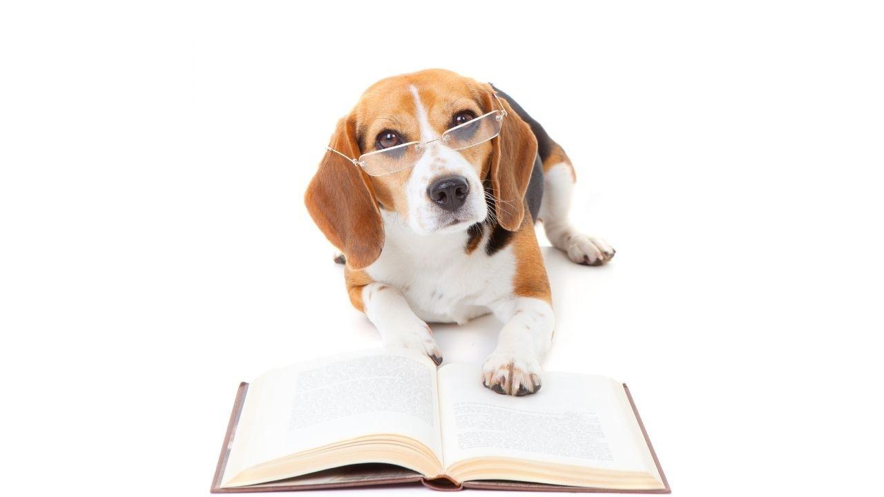 koiran ruokinta kirjat