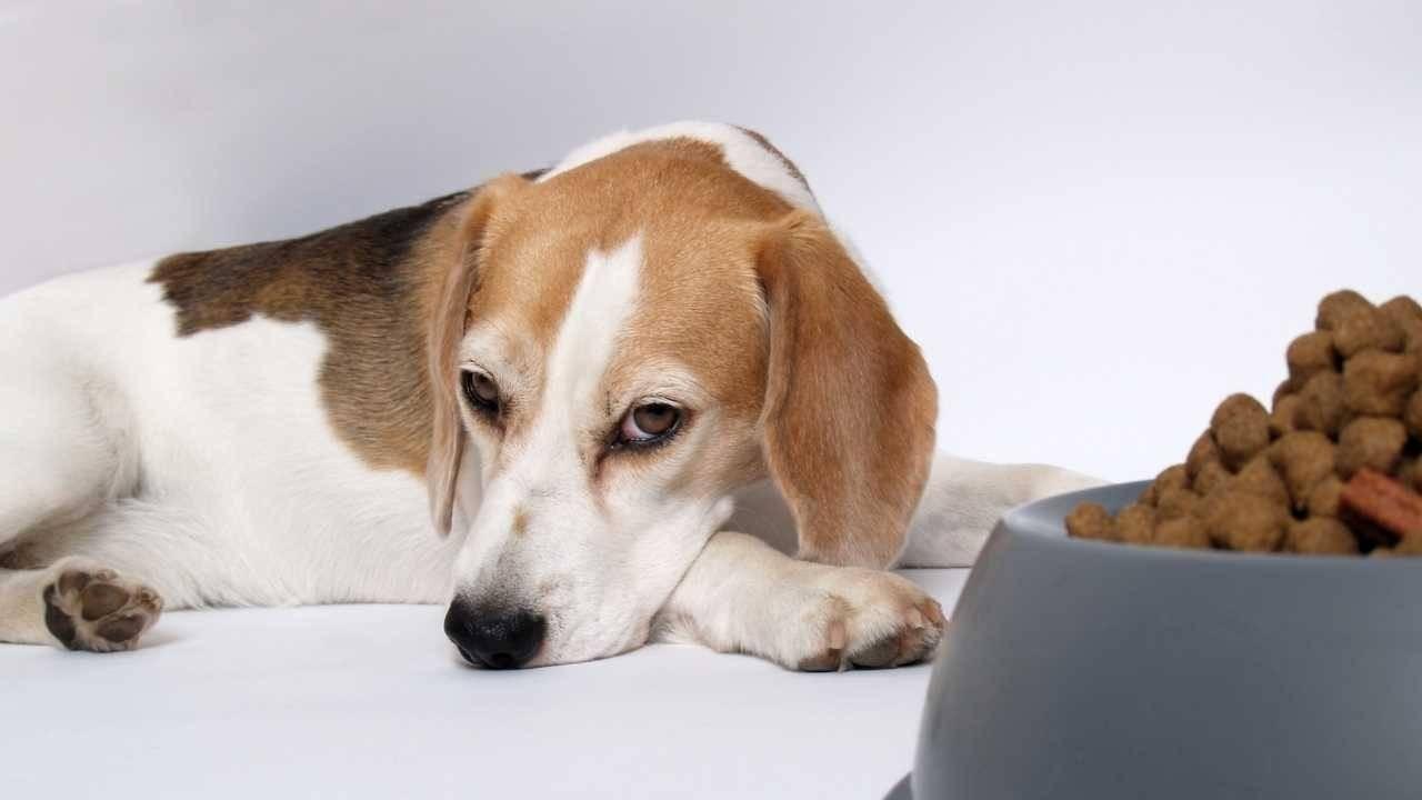 paras kuivamuona on koiralle haitallista