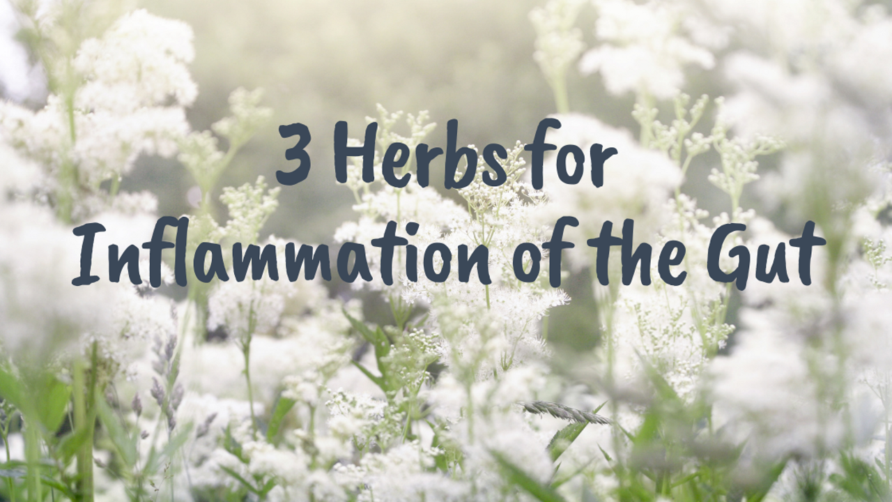 A field of meadowsweet with the words 3 Herbs for Inflammation of the Gut