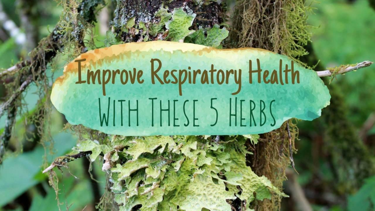 Tree with Lungwort Lichen (Lobaria pulmonaria) and the words 'Improve Your Respiratory Health With These 5 Herbs'
