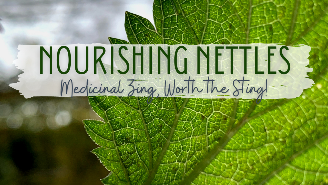 close up image of a nettle leaf with moody sky in the background and the words: nourishing nettles: medicinal zing, worth the sting!