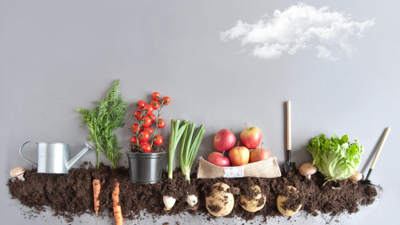 Growing Your Own Organic Vegetable Garden