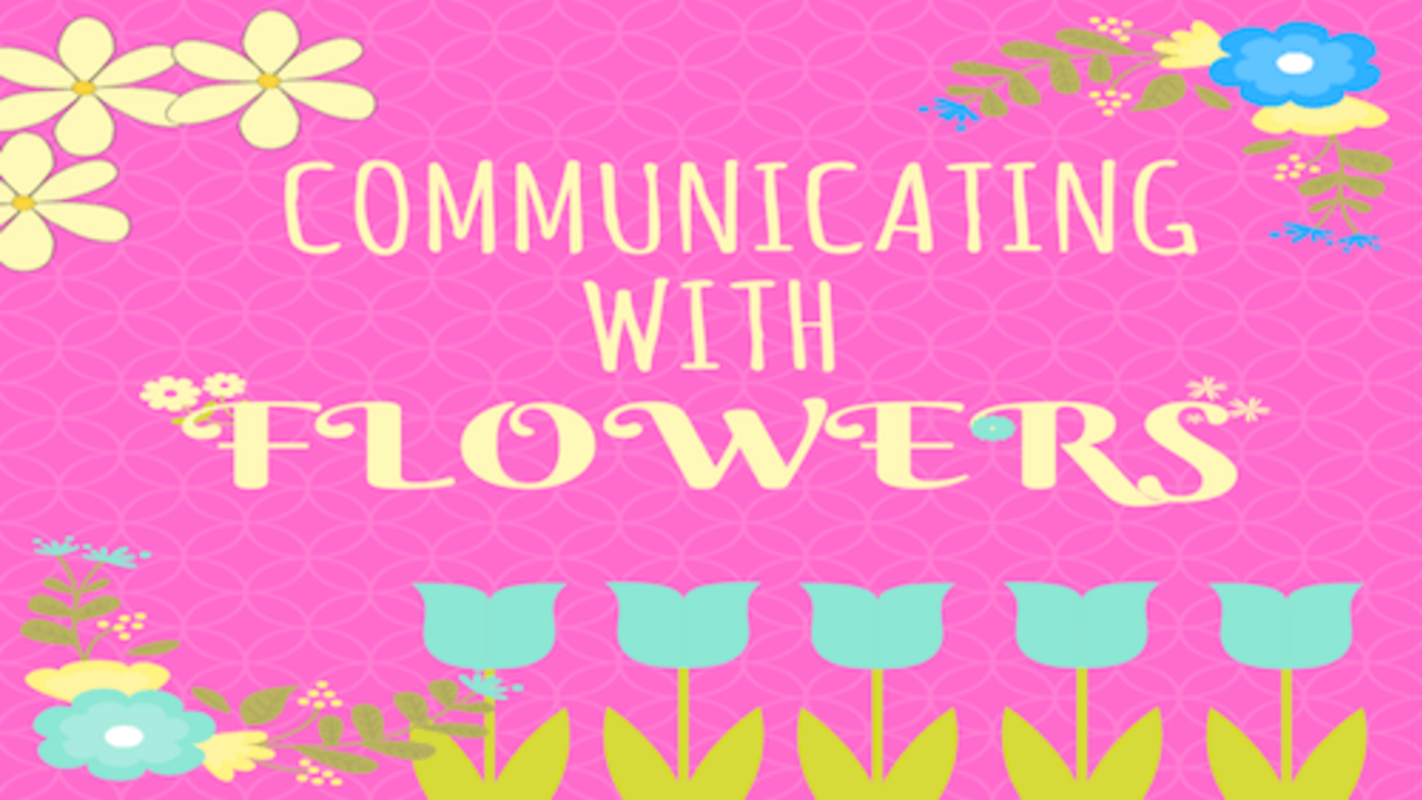 Communicating with flowers by communication skills training expert Dan O'Connor