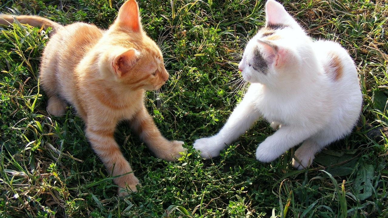 two cats on the grass
