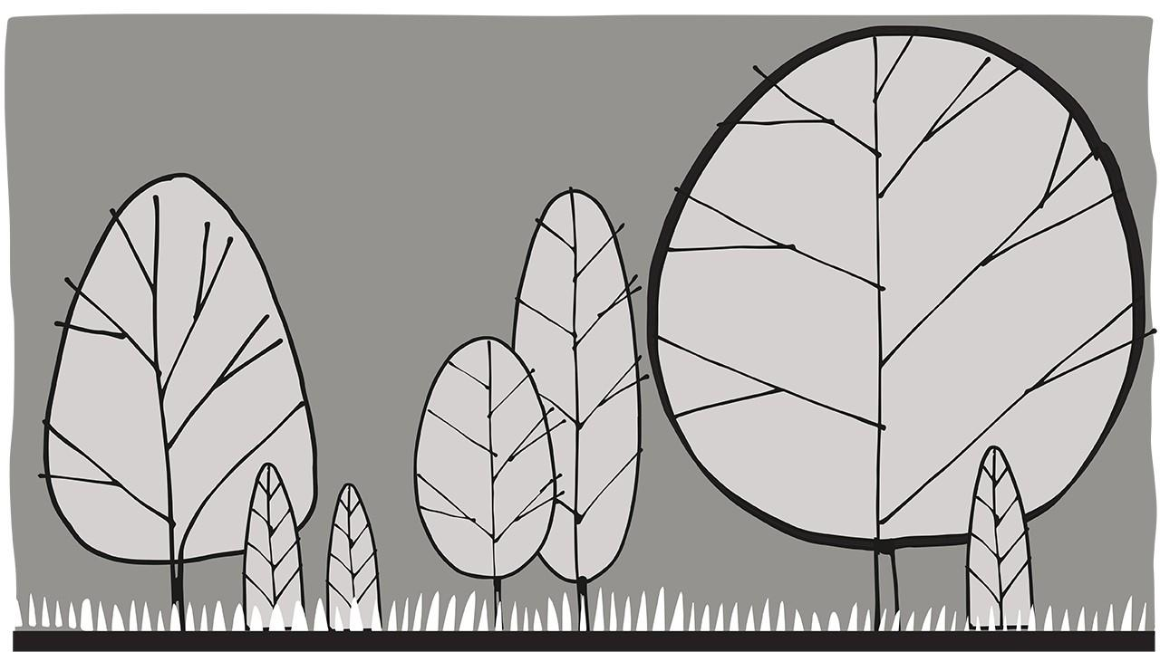 plant forms in elevation