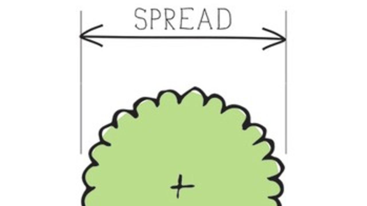 plant symbol showing spread