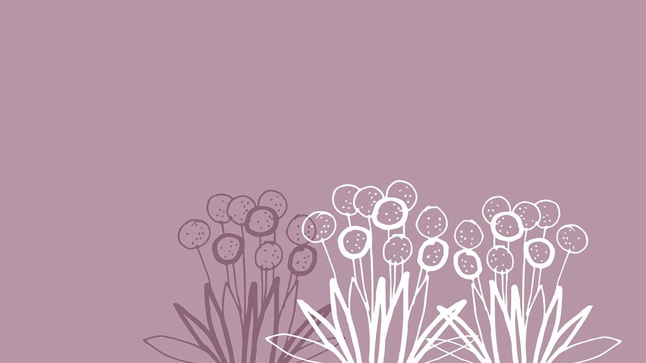 Photo of allium flowers