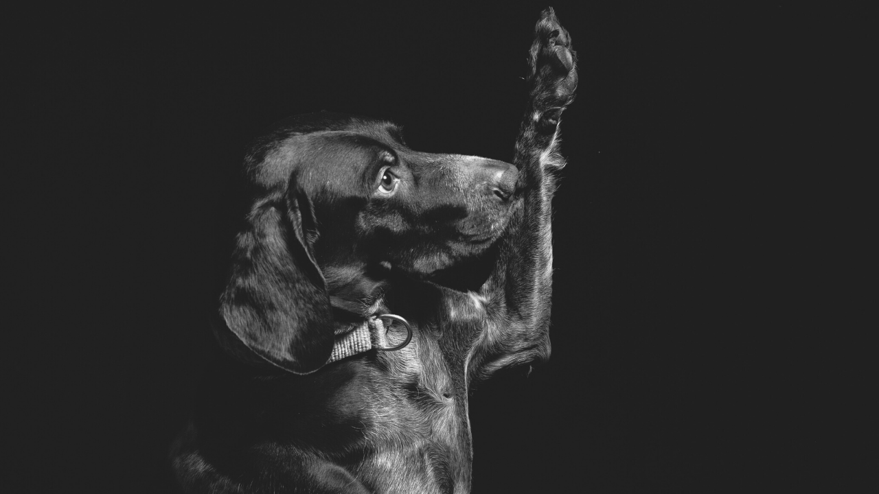 dog with raised paw looking like taking an oath to support blog post about truth-telling