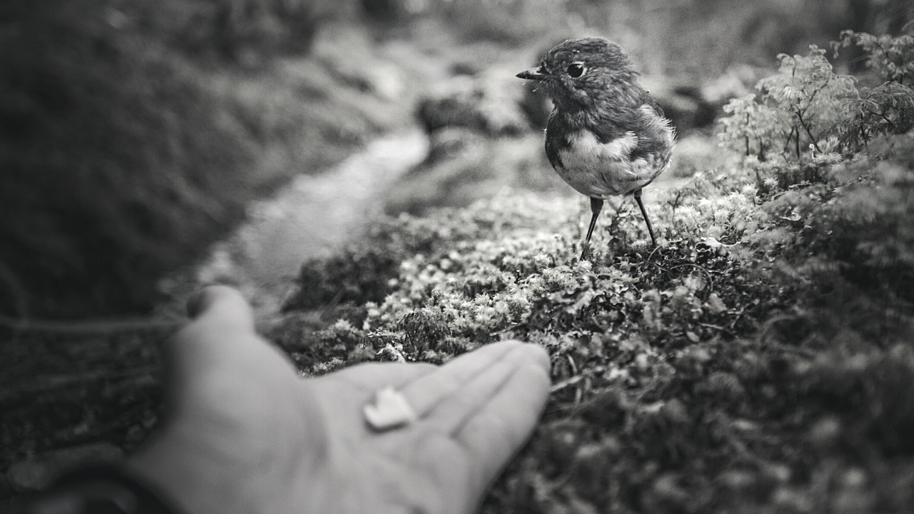 image of handfeeding a small bird to support blog post about trust