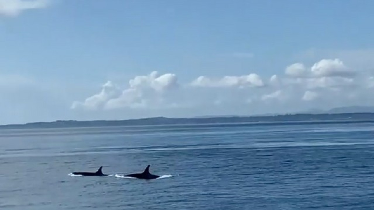 The Call of the Orca