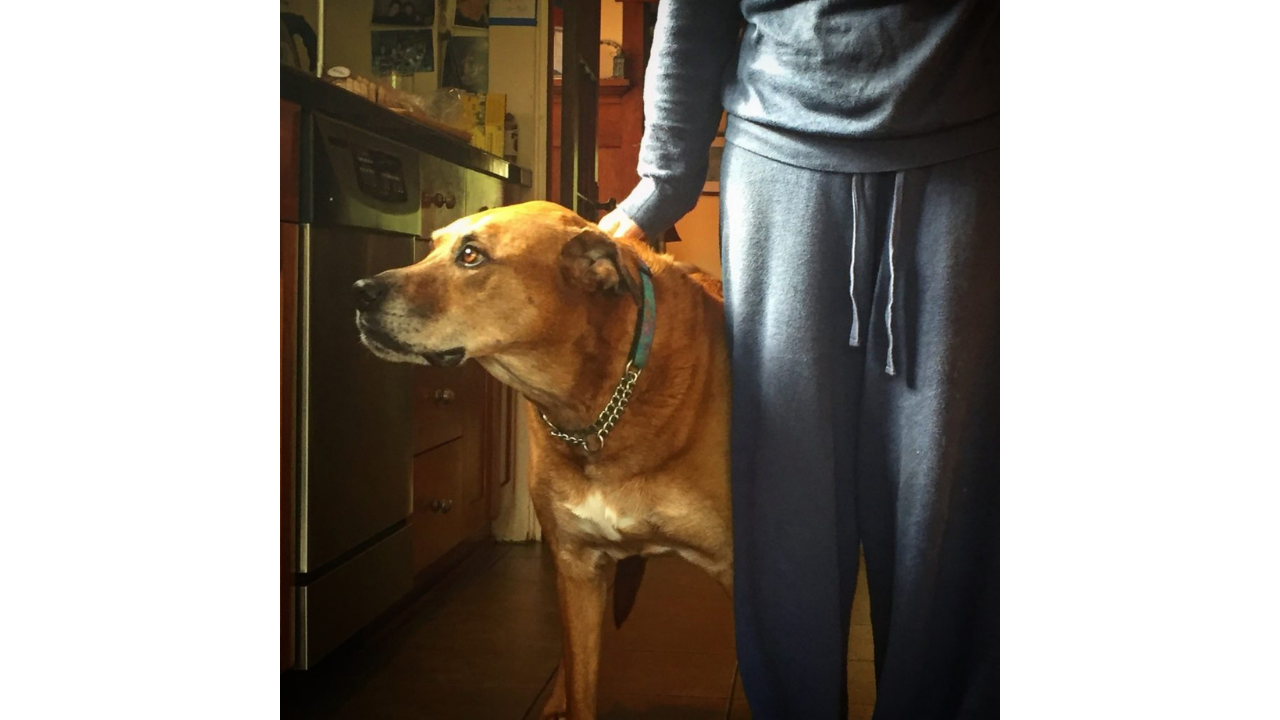 Grieving the Loss of My Dog