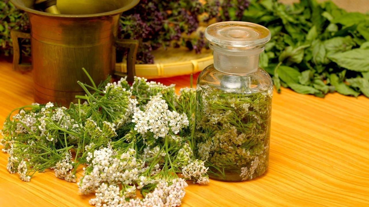 yarrow as herbal medicine