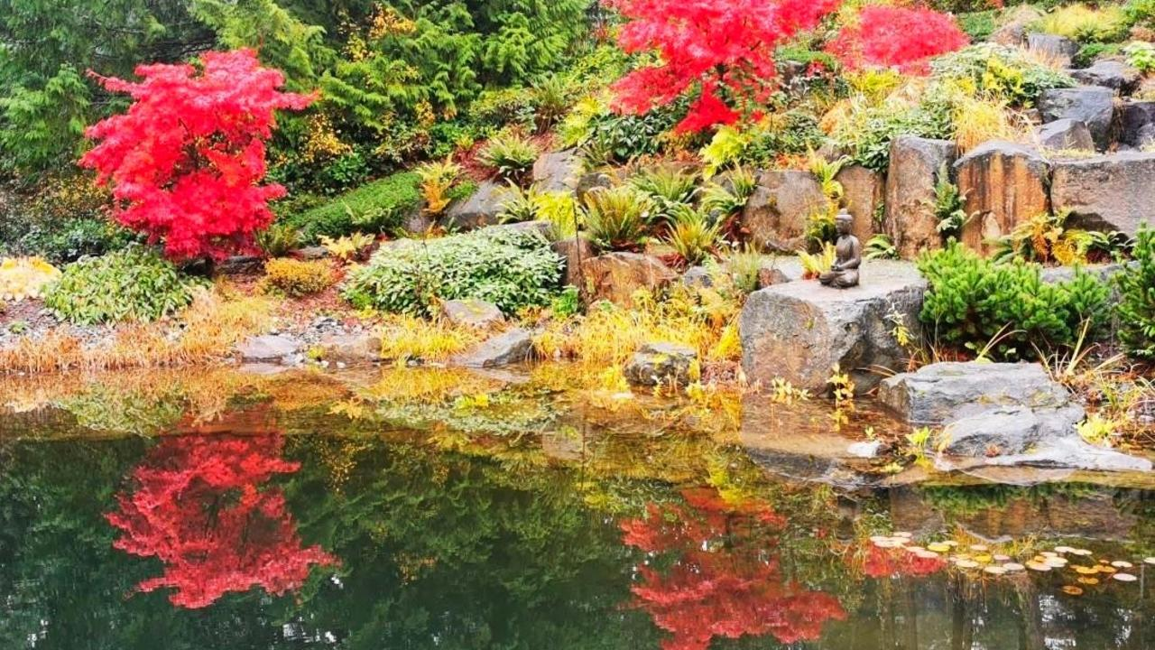 a colorful garden flower action planned by nature with peaceful visuals