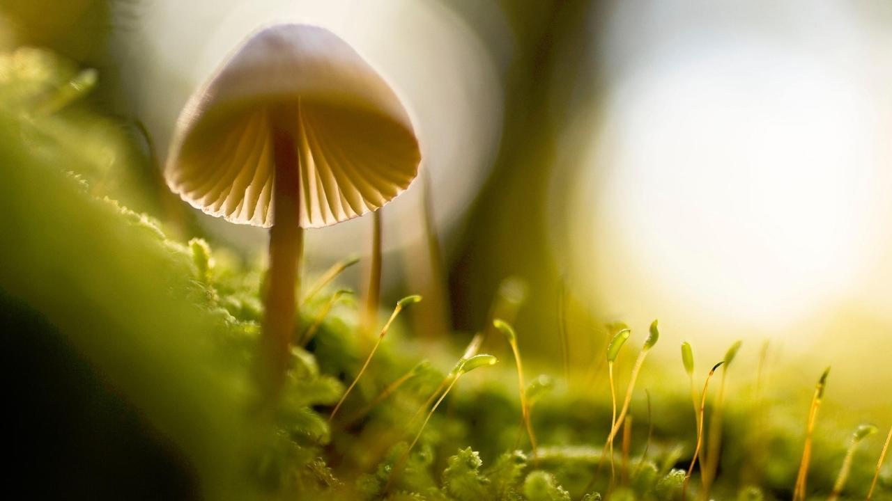 mushrooms on bright green grass