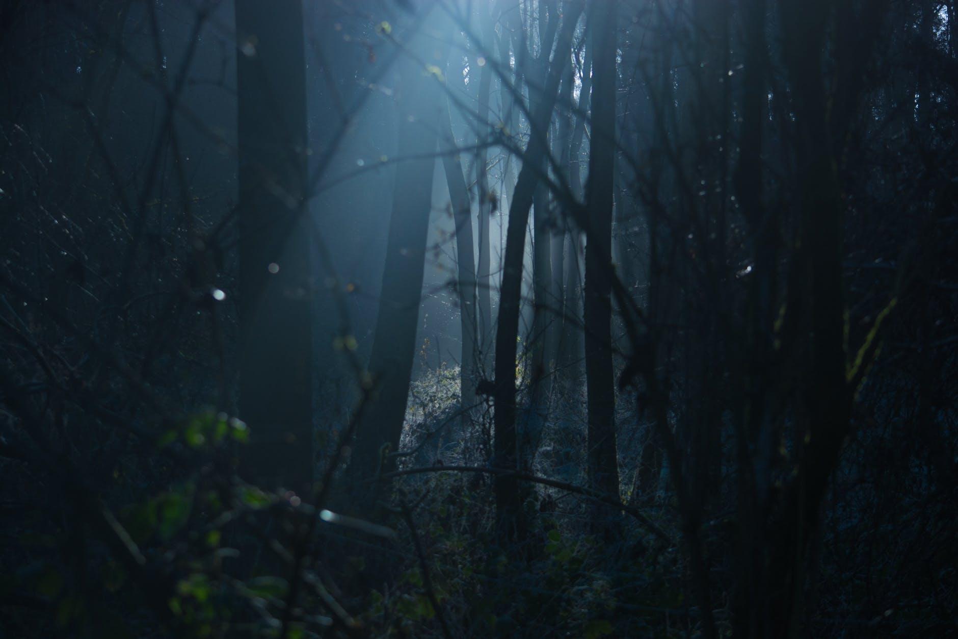 bosques-tenebrosos