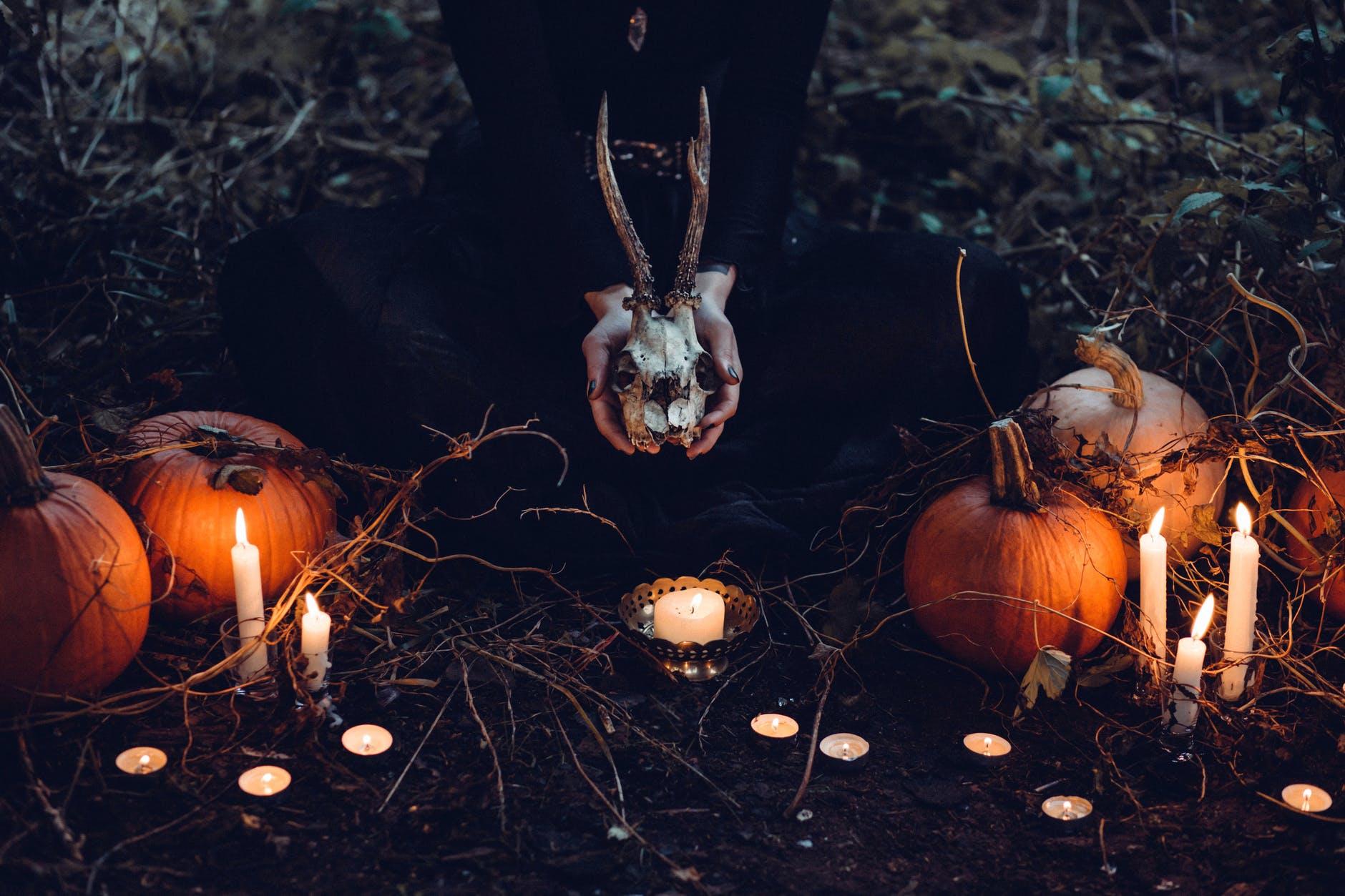bruejeria con calabazas, velas y un craneo de un animal