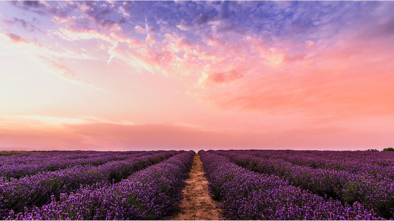 Live in abundance lavender graphics