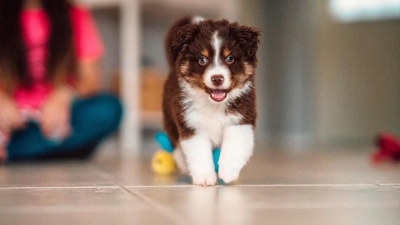 ¿Cómo hacer que mi perro se aprenda su nombre?