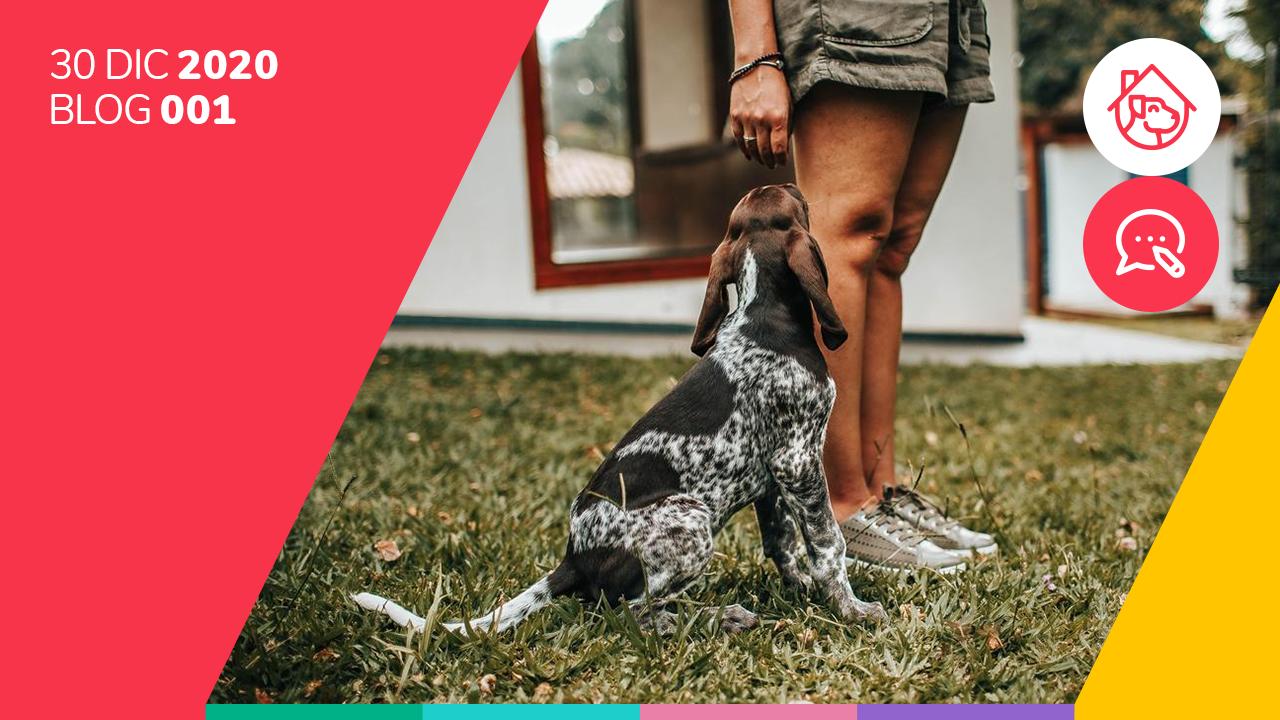 ¿Cómo enseñar a tu perro a ir al baño?