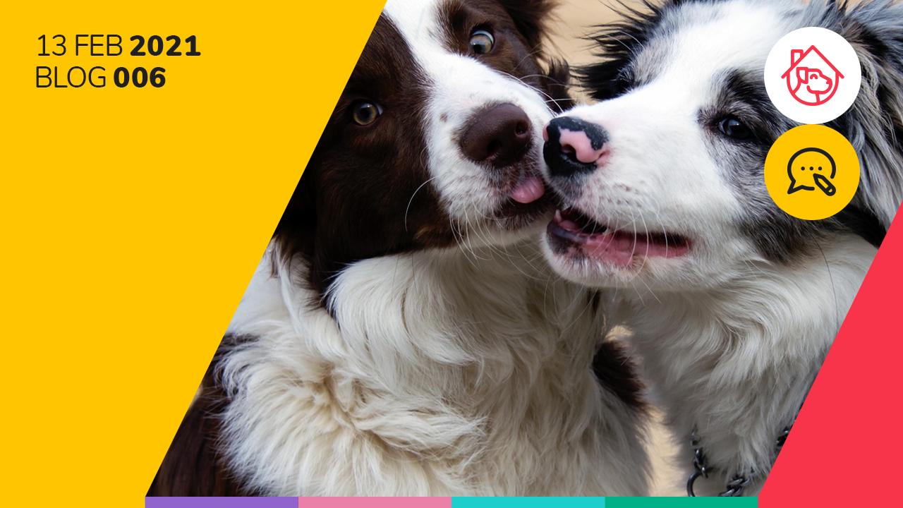 Las diez razas más inteligentes de perros.