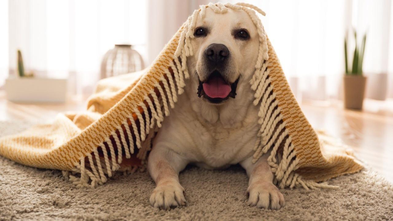 Cómo saber si es momento de traer un perro nuevo a casa