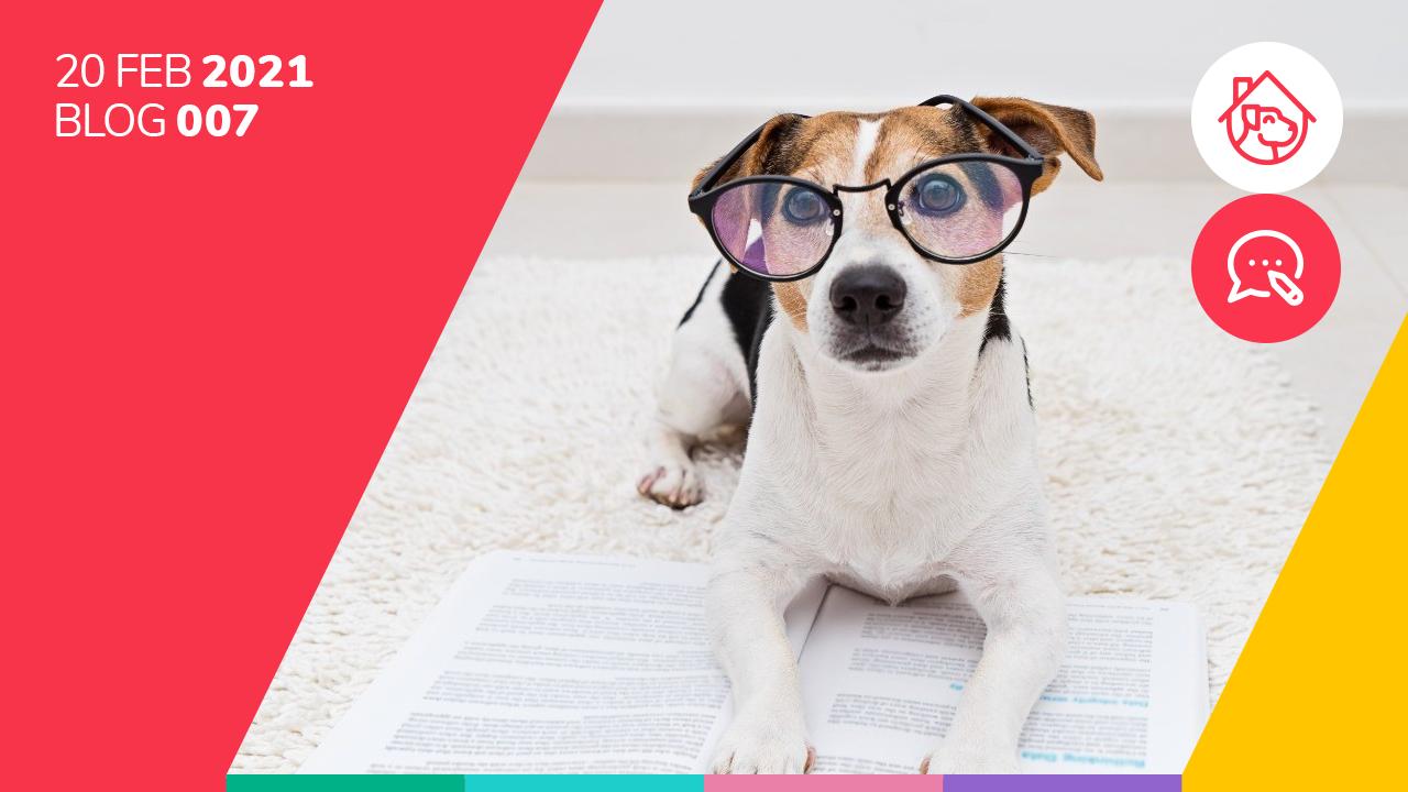 ¿Cuántas palabras entienden los perros?