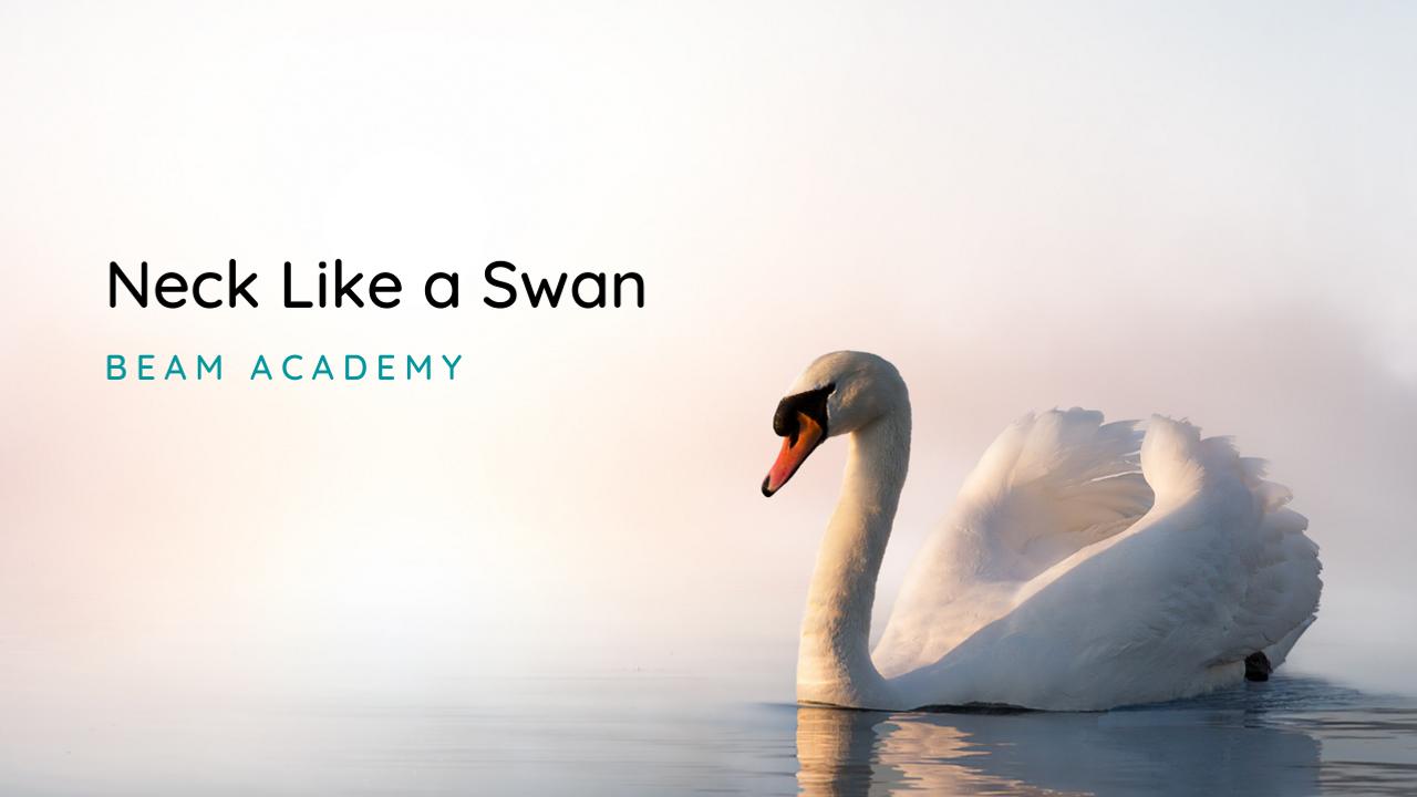 neck like a swan blog