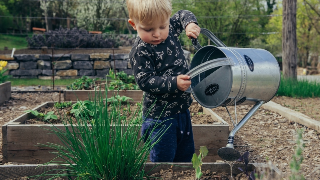 Little boy pouring an oversized watering can into a container garden