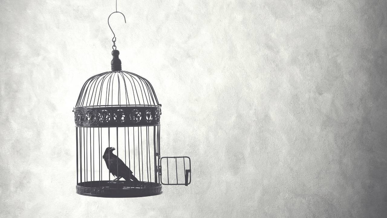 A bird sits in an open cage uncertain whether to leave and is held back by fear of what is outside of the cage