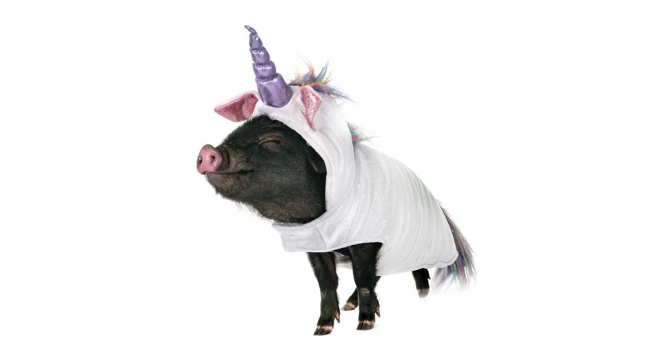 Pig dressed up as a unicorn - own our uniqueness