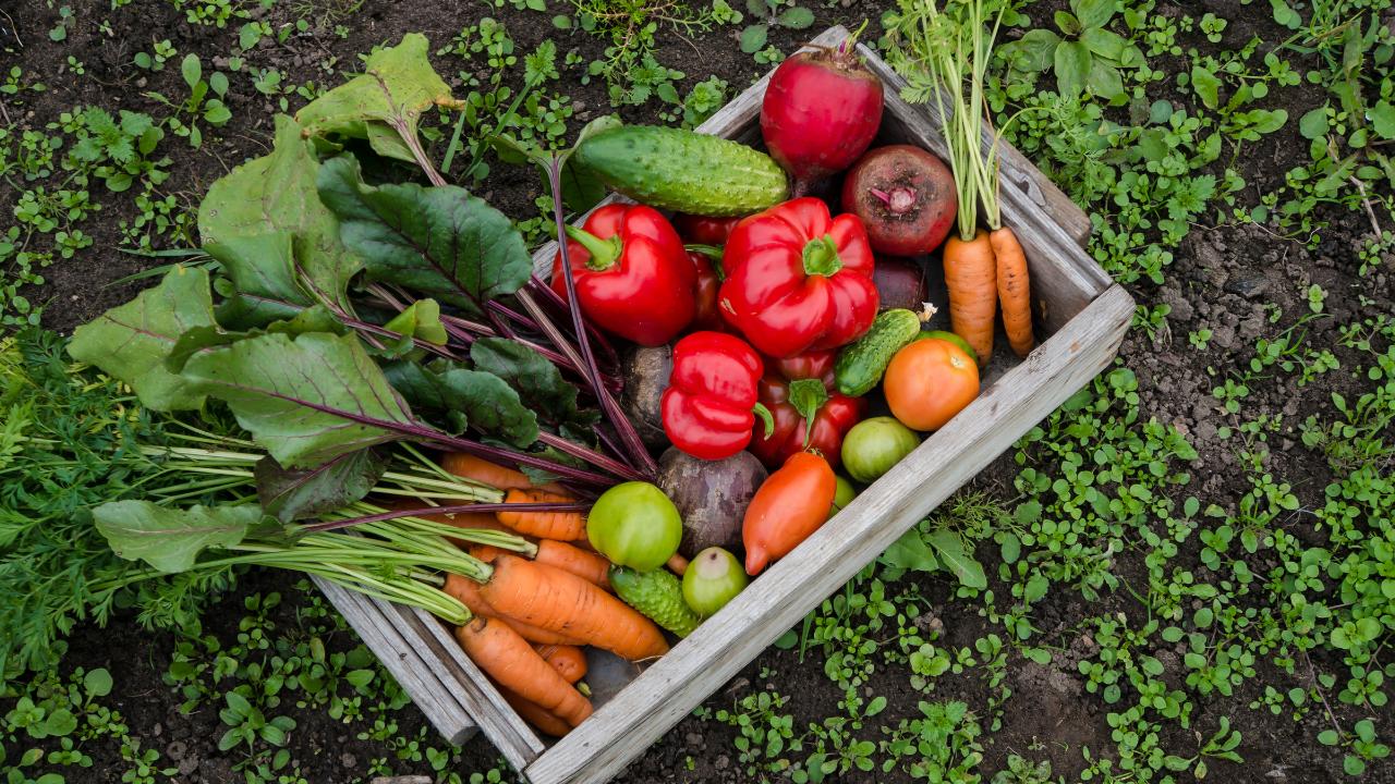 Garden vegetables grown in backyard
