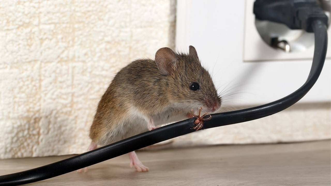 Do you let mice destroy your business - CPA Edge