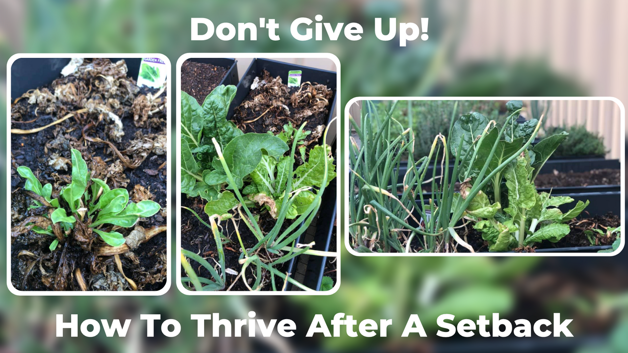 How To Thrive After A Setback